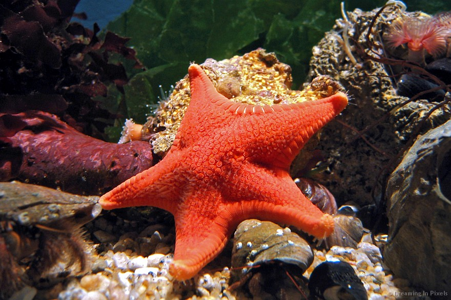 a sea star